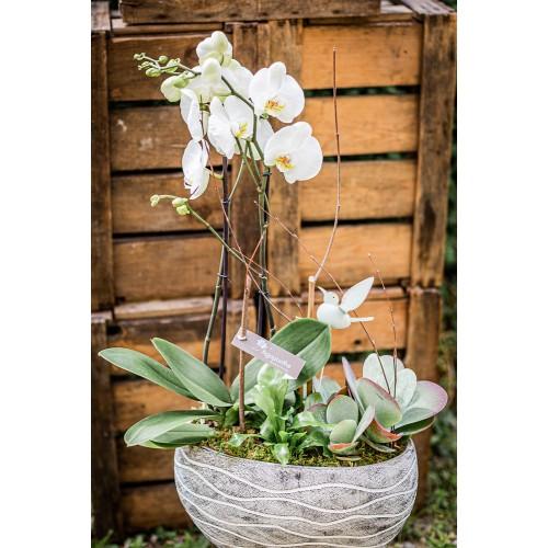 Plantation d'orchidée